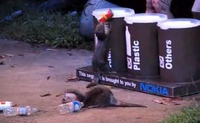 カワウソ君 シンガポール動物園のカワウソ君がゴミの分別に挑戦している映像を紹介しよう。動物園のシ